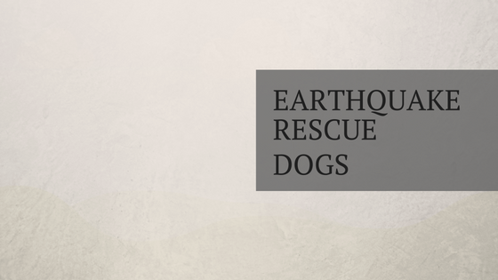 The Amazing Work of Earthquake Rescue Dogs