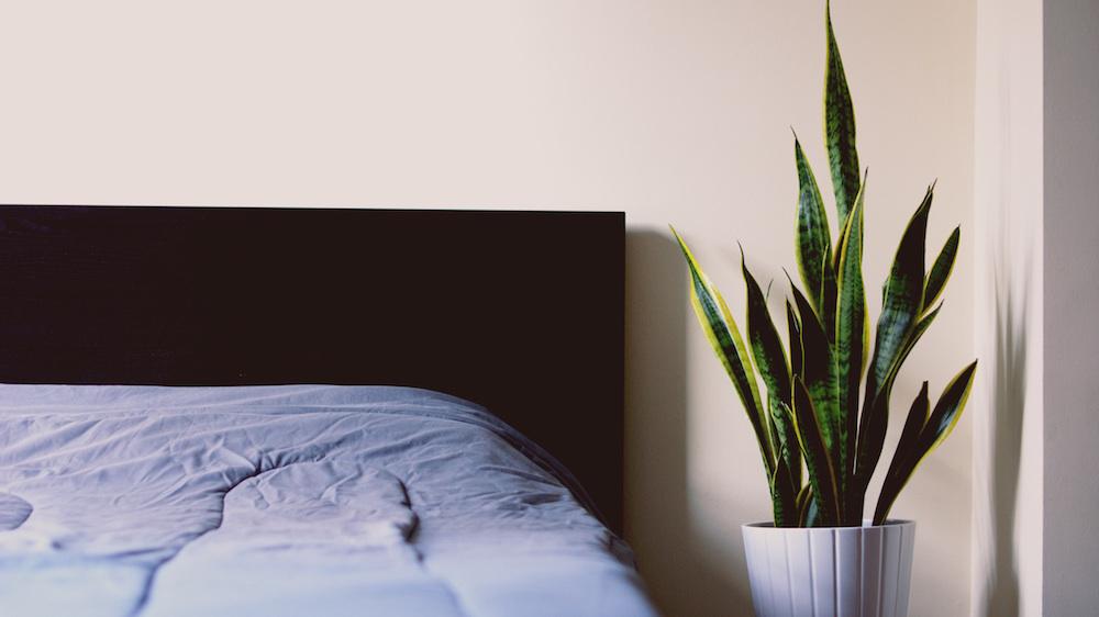 Surprising Sleep Habits From Around the World